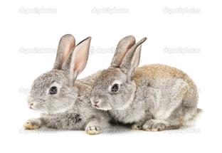 кролики на белом