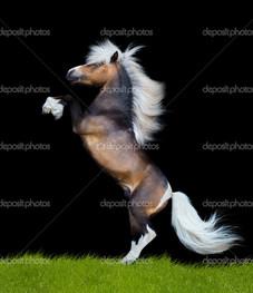 конь встал на дыбы