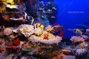 подводные сцены