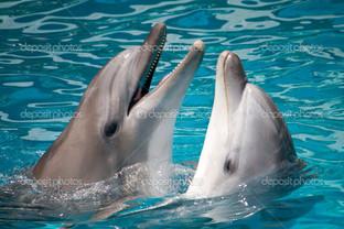 два серых дельфина