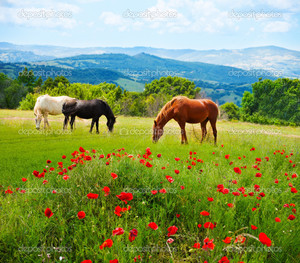 лошади маки