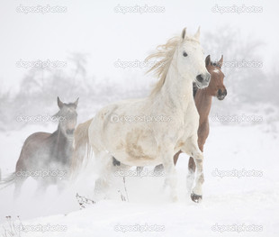 белая лошадка на снегу