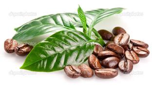кофе листья
