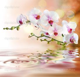 красивые отражение