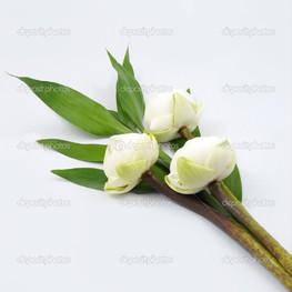 букет белых лотосов