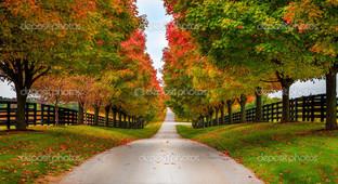 деревья вдоль улицы