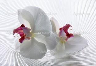 стиль орхидеи