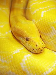 желтый змей