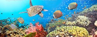 подводная панорама