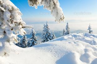 белые ёлки в снегу