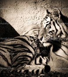 тигр чёрно-белое