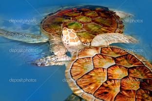 две черепахи