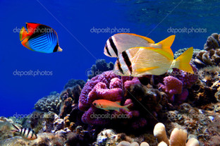 подводные коралловые рифы и тропические рыб