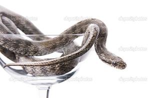змея в бокале