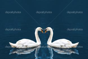 два лебедя на синем