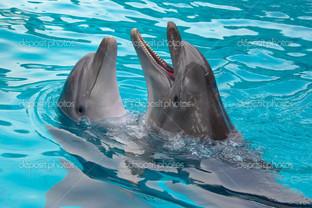 танго дух дельфинов