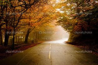 путь желтые деревья