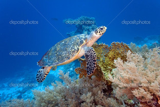 океан и черепаха