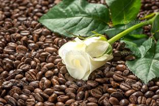 белая роза и зёрна кофе