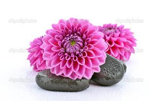 пурпурные цветы