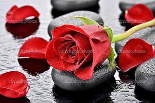 красная роза и камни