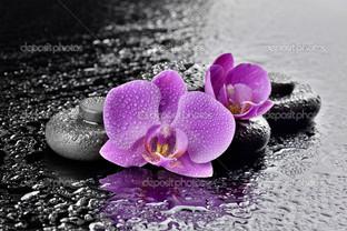 две орхидеи и камни
