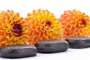 оранжевые цветы на камнях