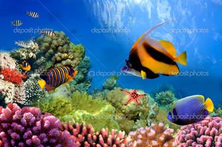 морская жизнь на коралловых рифах