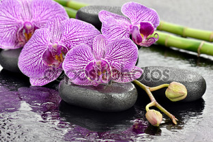 орхидеи на базальте