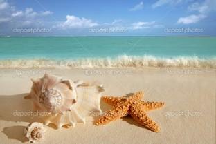 море ракушки морские звезды