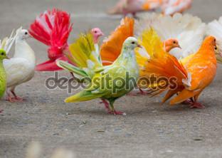 цветные голуби на асфальте