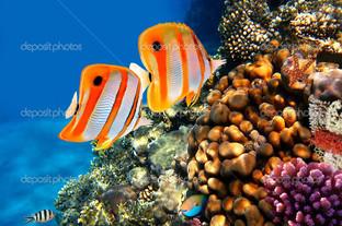 кораллы риф