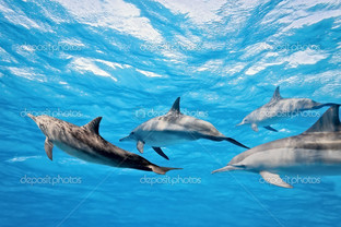 стая дельфинов