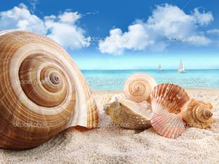 горизонт ракушки на пляже