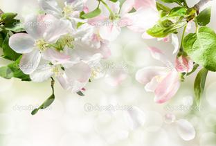 нежные цветы