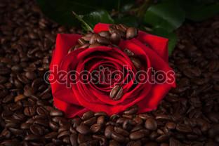 красная роза жареное кофе бобы