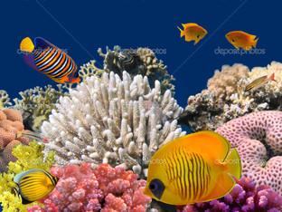 жизнь на коралловых рифах