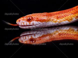 отражение змея