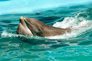 дельфины пара в любви