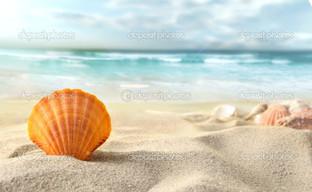 вид на раковины на пляже