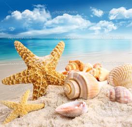 вид морская звезда и ракушки на пляже