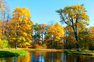 парк и утки на водоёме
