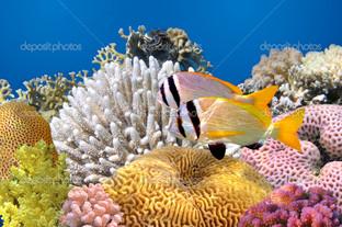 подводный вид Красного моря