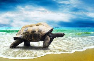 большая черепаха в тропическом океане