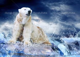 белый медведь на льдине