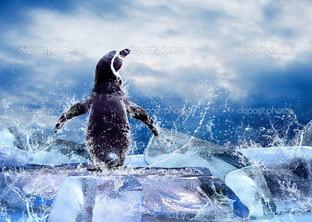 пингвин на льдине