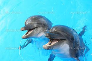 дельфины плавают в бассейн
