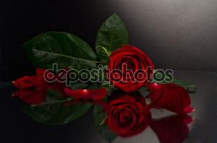 роза отражение чёный фон