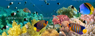 Ангелы рыбки на коралловом рифе