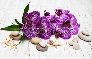 ракушки и орхидеи